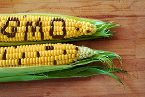 The Real Reason GMO Matters