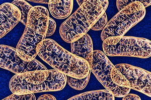 Meet your mitochondria!