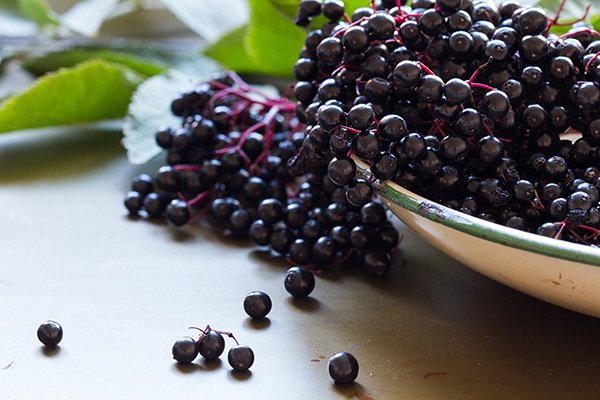 Adding elderberry to your health routine is a smart move