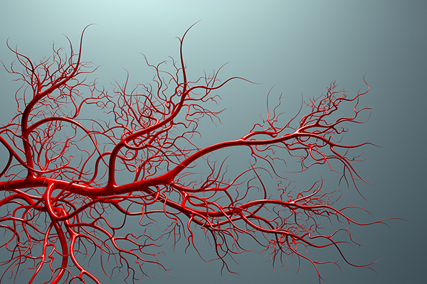 Cardiovascular health: How to care for miles of blood vessels with dietary supplements